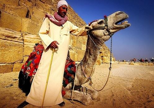 Не катайтесь на верблюдах перед пирамидами.  Эти украшенные помпонами и кистями животные в расшитых попонах кажутся очень подходящими, чтобы сфотографироваться, сидя на них верхом, на фоне синего неба и величественных пирамид. И погонщик так старательно демонстрирует, насколько послушен верблюд и как он готов опуститься на колени по первому требованию, чтобы принять на свою спину туриста. Просто имейте ввиду, что эта фотография обойдется вам во все наличные, которые у вас с собой имеются. Потому что прыгать на лишь кажущийся мягким песок с высоты двух с половиной метров вы вряд ли захотите.  Лучше пройдите чуть в сторону, к Сфинксу, туда, где расположились стойбища верблюдов, на которых организуют экскурсии по пустыне. Поговорите с погонщиками, поскольку цены могут отличаться в разы, и отправляйтесь на верховую прогулку. Пожалуй, лучшее время для путешествия - перед самым закатом, когда вы сможете полюбоваться на багряный диск, скрывающийся за горизонтом в сопровождении отголосков молитв, доносящихся из всех мечетей Каира. К слову, имейте ввиду, что каждый час, проведенный верхом на верблюде, заставит вас потом сутки ходить походкой, напоминающей о короле вестерна Джоне Уэйне.